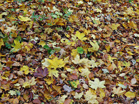 Foliage, Autumn, Autumn Gold, Yellow Leaves, Forest