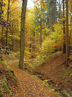 Autumn, Forest, Golden Autumn, Autumn Forest