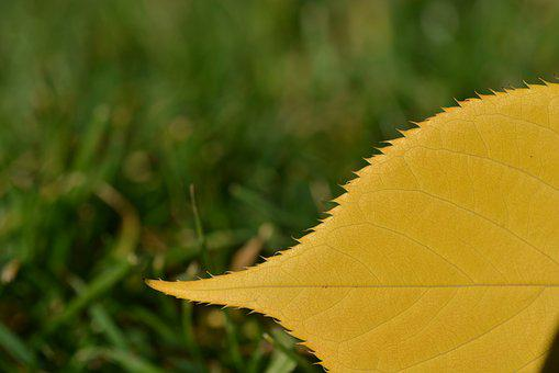 Autumn Leaf, Autumn, Leaf, Leaves, Nature, Fall Color