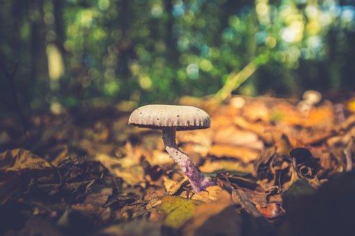 Mushroom, Autumn, Mushrooms, Nature, Forest