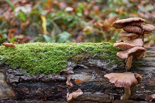 Mushroom, Log, Nature, Autumn, Forest, Moss