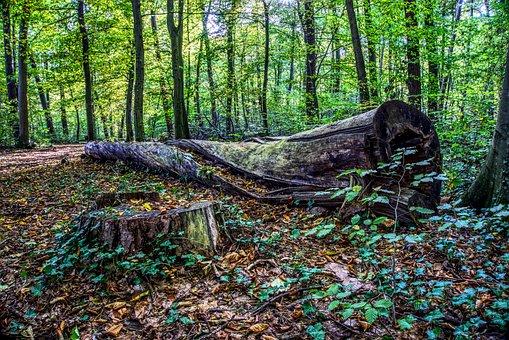Log, Morsch, Rot, Old, Upset, Broken, Wood, Tree