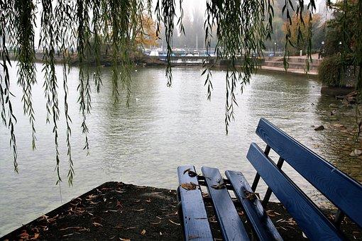 Willow, Bench, Autumn, Haze, Lake, Bodensee, Park
