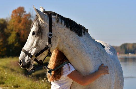 Horse, Pony, Girl, Love For Animals