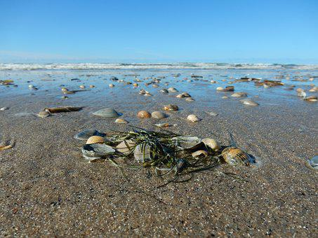 Shell, North Sea, Beach, Sand, Water, Sea, Sand Beach