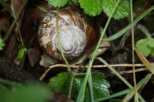 Snail, Summer, Shell, Nature, Plant, Slowly