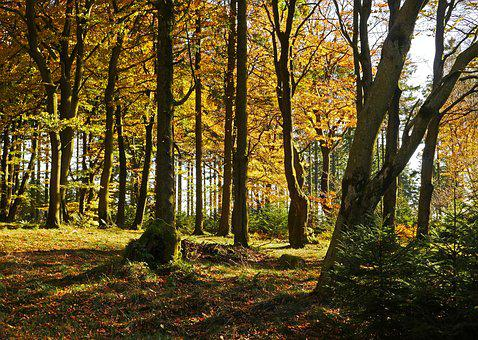 Autumn Forest, The Ebbe Mountains, Sauerland, Altitude