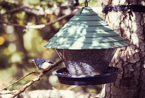 Bird, Aviary, Nesting Box, Bird Feeder, Treehouse
