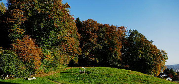 Nature, Forest, Edge Of The Woods, Autumn, Sun, Evening