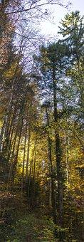 Autumn, Sun, Leaves, Golden Autumn, Sky, Back Light