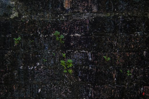 Brick Wall, Algae, Wall, Old, Brick, Texture, Pattern