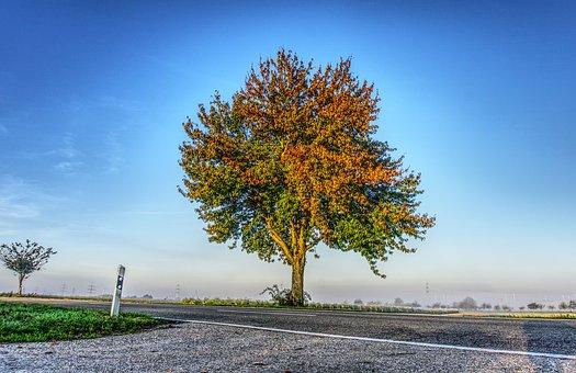 Tree, Leaves, Colorful, Green, Autumn, Autumn Colours
