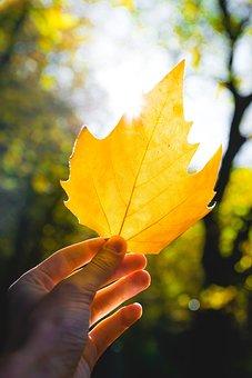 Hand, Sun, Light, Hands, Finger, Mood, Leaf, Autumn