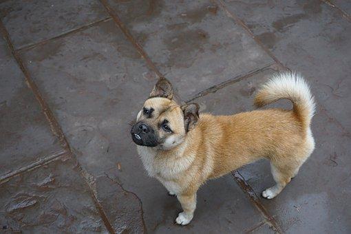 Dog, Doggy, Cute, Animal, Pet, Puppy, Canine, Mammal