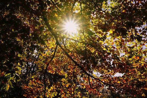 Sun, Fall Foliage, Colorful Leaves