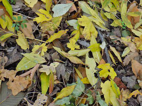 Autumn Leaf, Foliage, Yellow Sheet, Colors Of Autumn