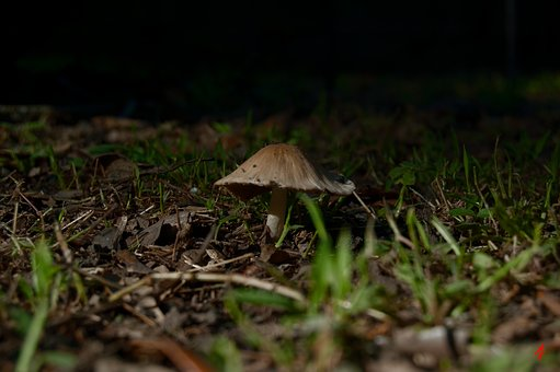 Mushroom, Fungi, Nature, Autumn, Food, Fungus, Brown
