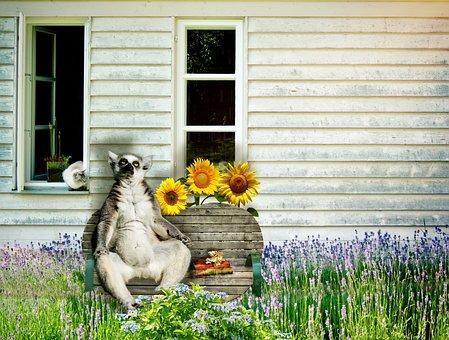 Lemur, Cat, Bank, Funny, Animals, Hauswand, Window