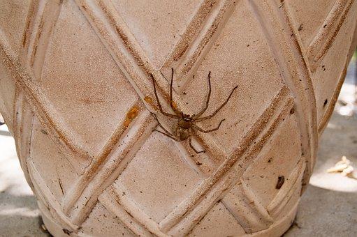 Huntsman Spider, Spider, Arachnid, Huntsman, Bug