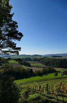 Landscape, Nature, Vines, Wine, Wide, Sun, Tree