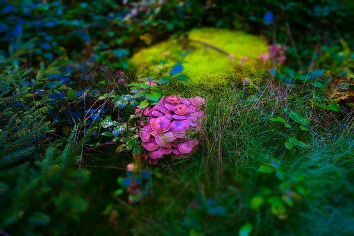 Moss, Mushroom, Nature, Forest Floor, Moss Fliegenpilz