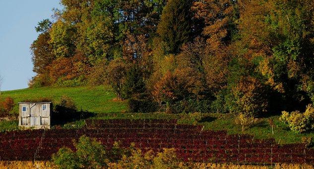 Nature, Autumn, Vineyard, Vines, Home, Evening, Sun