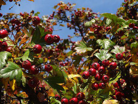 Nature, Fruit, Red, Beautiful, Macro, Close-up