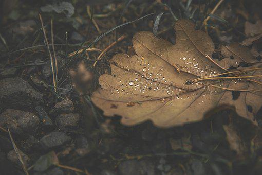 Forest, Leaf, Drip, Autumn, Leaves, Nature, Plant