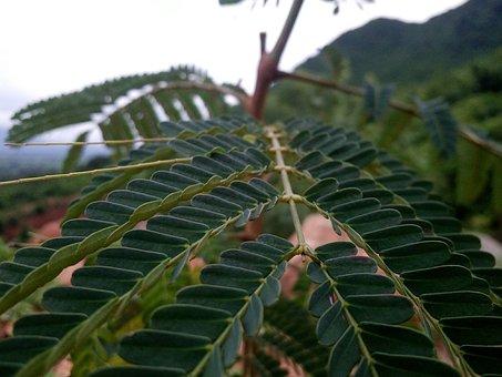 Blur, Dslr, Focous, Leaf, Nature, Flora, Tree, Closeup