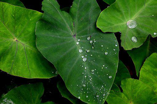 Green, Leaf, Water, Nature, Green Leaf, Environment