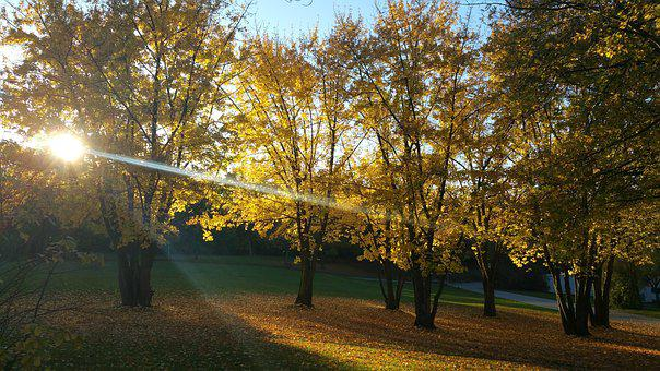 Rest, Park, Leaves, Bank, Walk, Fall Foliage, Nature