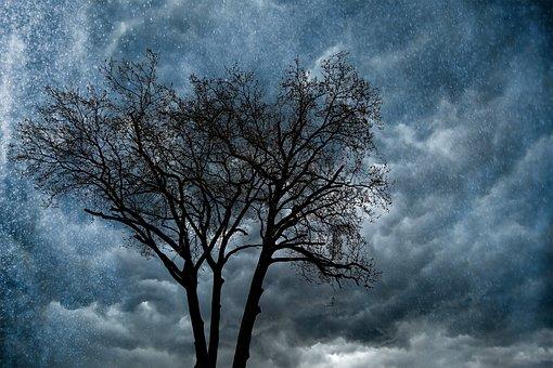 Tree, Rain, Nature