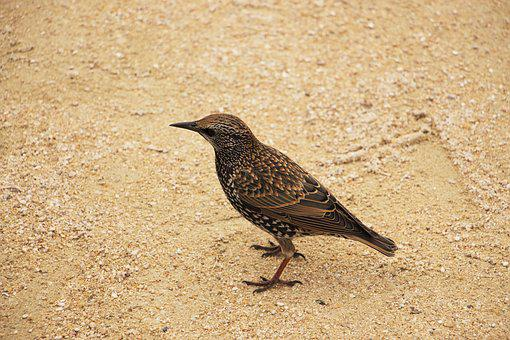 Bird, Small, Wildlife, Wild, Red, Nature, Image, Animal