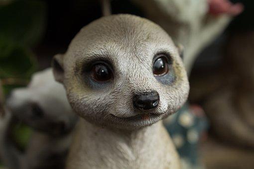 Meerkat, Cute, Rodent, Mammal, Animal, Nature, Wild