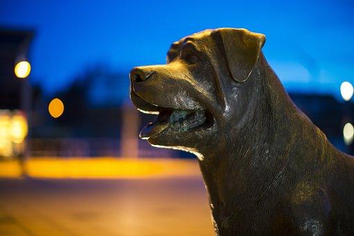 Rottweiler Dog, Dog, Statue, Pet, Hundeportrait
