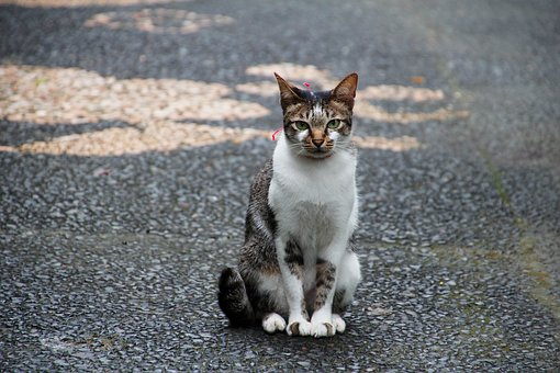 Cat, Sit, Wait, Cute, Pet, Animal, Nature, Domestic Cat