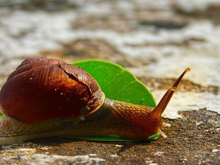 Snail, Leaf, Stone