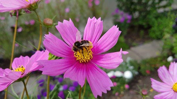 Nature, Flower, Summer, Garden, Plant, Flowers, Bee