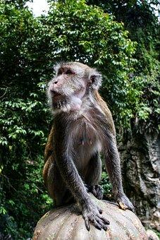 Thailand, Nature, Monkey, Tourism, Attention, Thief