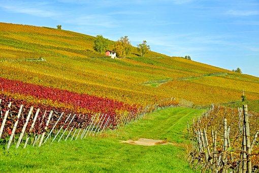 Vineyard, Vines, Winegrowing, Slope, Wine, Vine