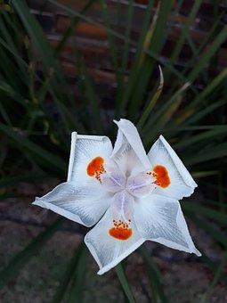 Flower, White, Tranquility, White Flower, Nature