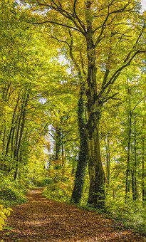 Tree, Forest, Away, Trail, Autumn, Beautiful, Color