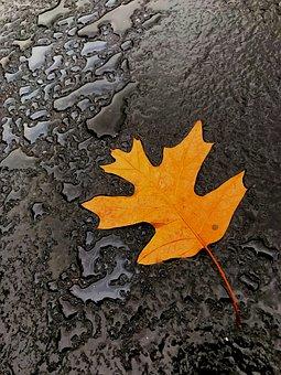 Leaf, Autumn, Fall, Water, Rain, Ground, Nature, Beauty