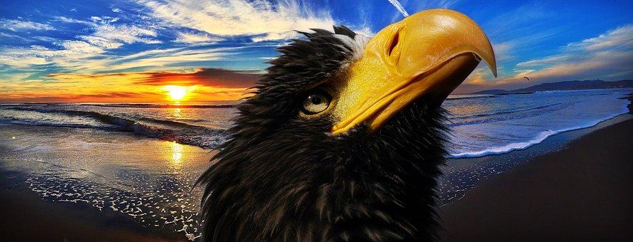 White Tailed Eagle, Bird Of Prey, Raptor, Adler, Bird
