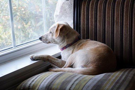 Puppy Dog, Chair, Window, Lying, Looking