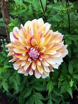 Autumn Flower, Chrysanthemum, Flower Garden