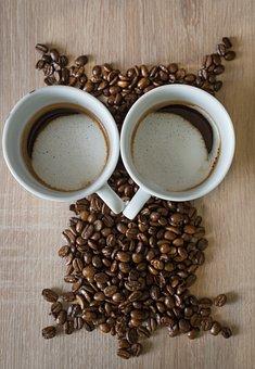 Owl, Coffee, Coffee Cup