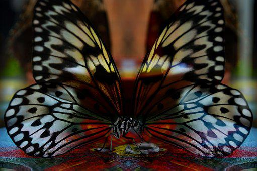 Butterfly, Mirrored, Surreal, Wings, Light, Color, Art