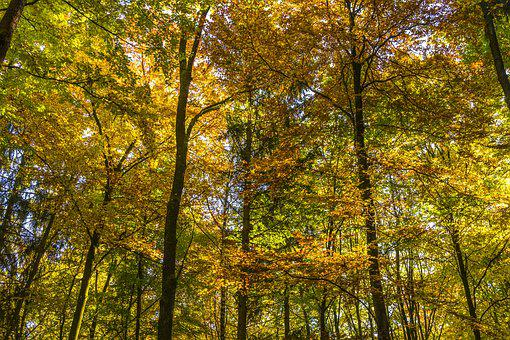 Canopy, Autumn, Forest, Coloring, Beautiful, Idyll