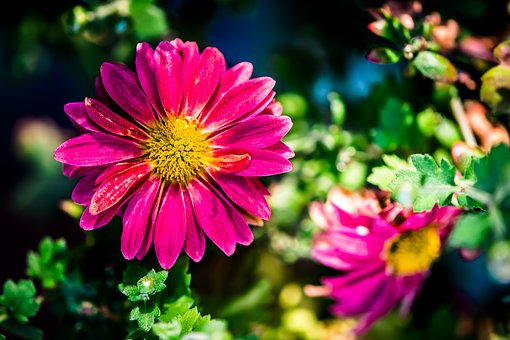 Flower, Purple, Garden, Spring, Colors
